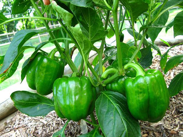 Organic Food Farmers Market